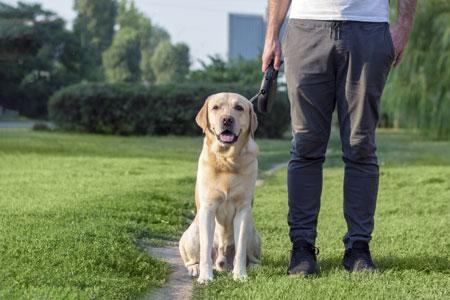 Páginas web para adiestradores caninos en Sevilla