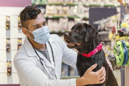 Páginas web y tiendas online para veterinarios y clínicas veterinarias en Sevilla